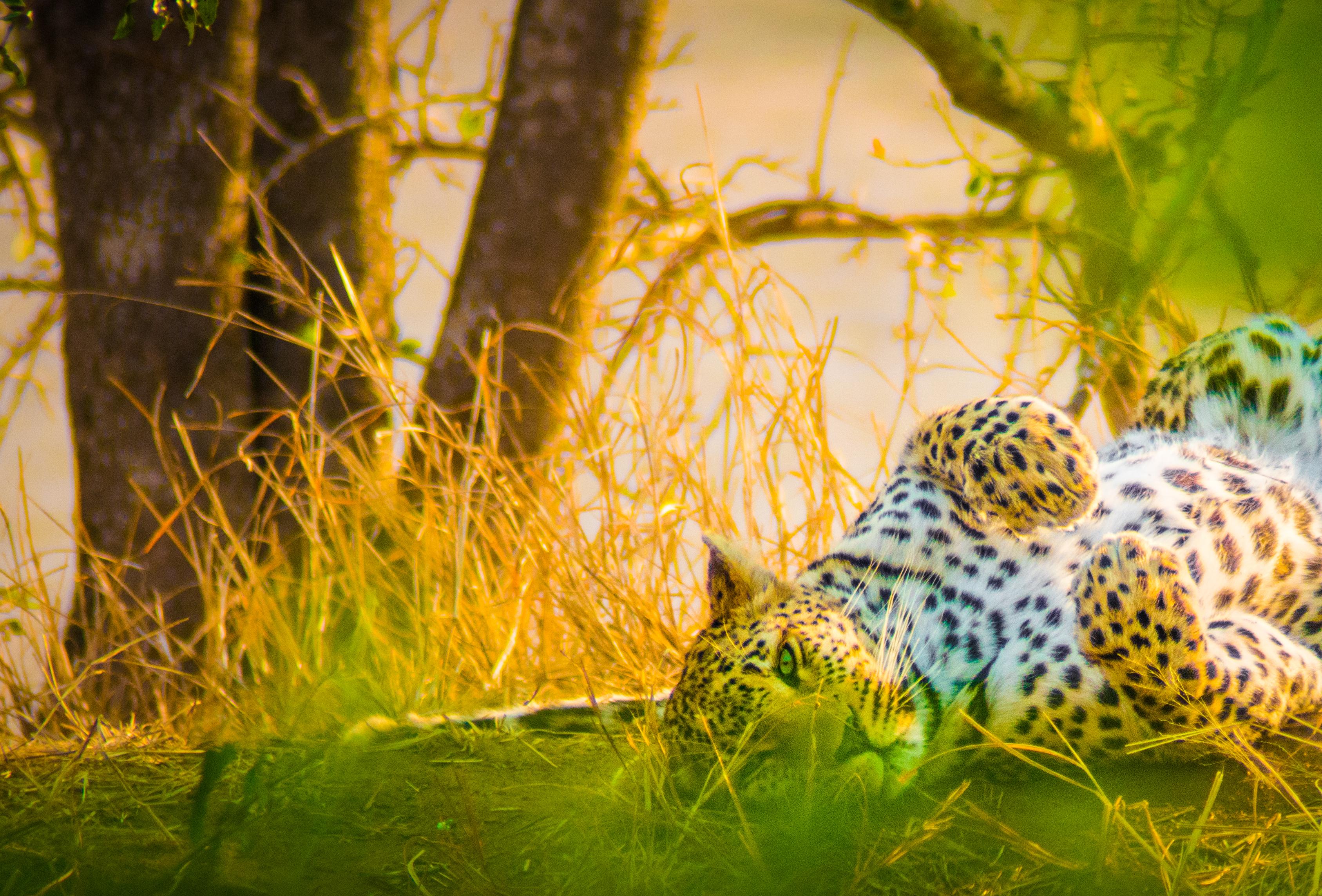 sudafrica - camminatefotografiche