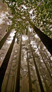 foreste casentinesi - camminate fotografiche